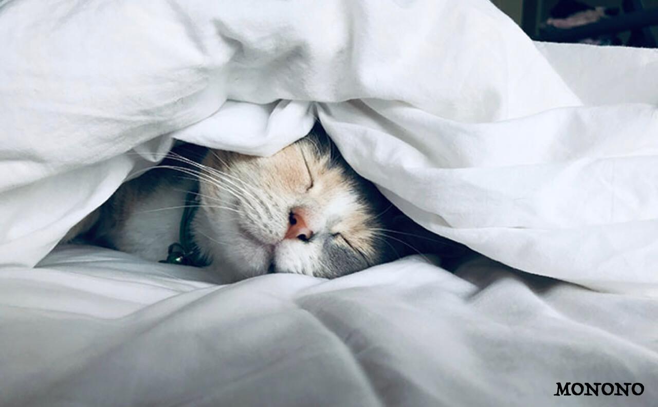 布団の下が濡れる原因とカビが生える前にやるべきマットレスの湿気対策まとめ